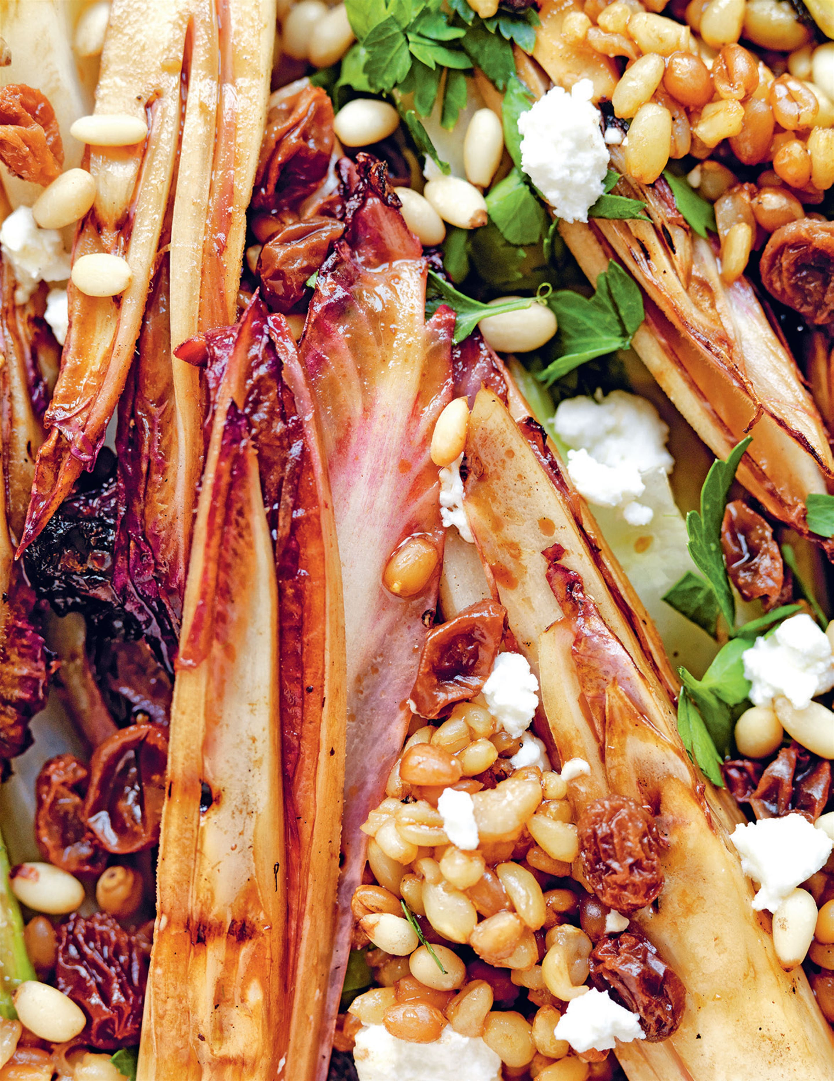 Chargrilled fennel & chicory with wheat grain, goat's cheese & pine nuts