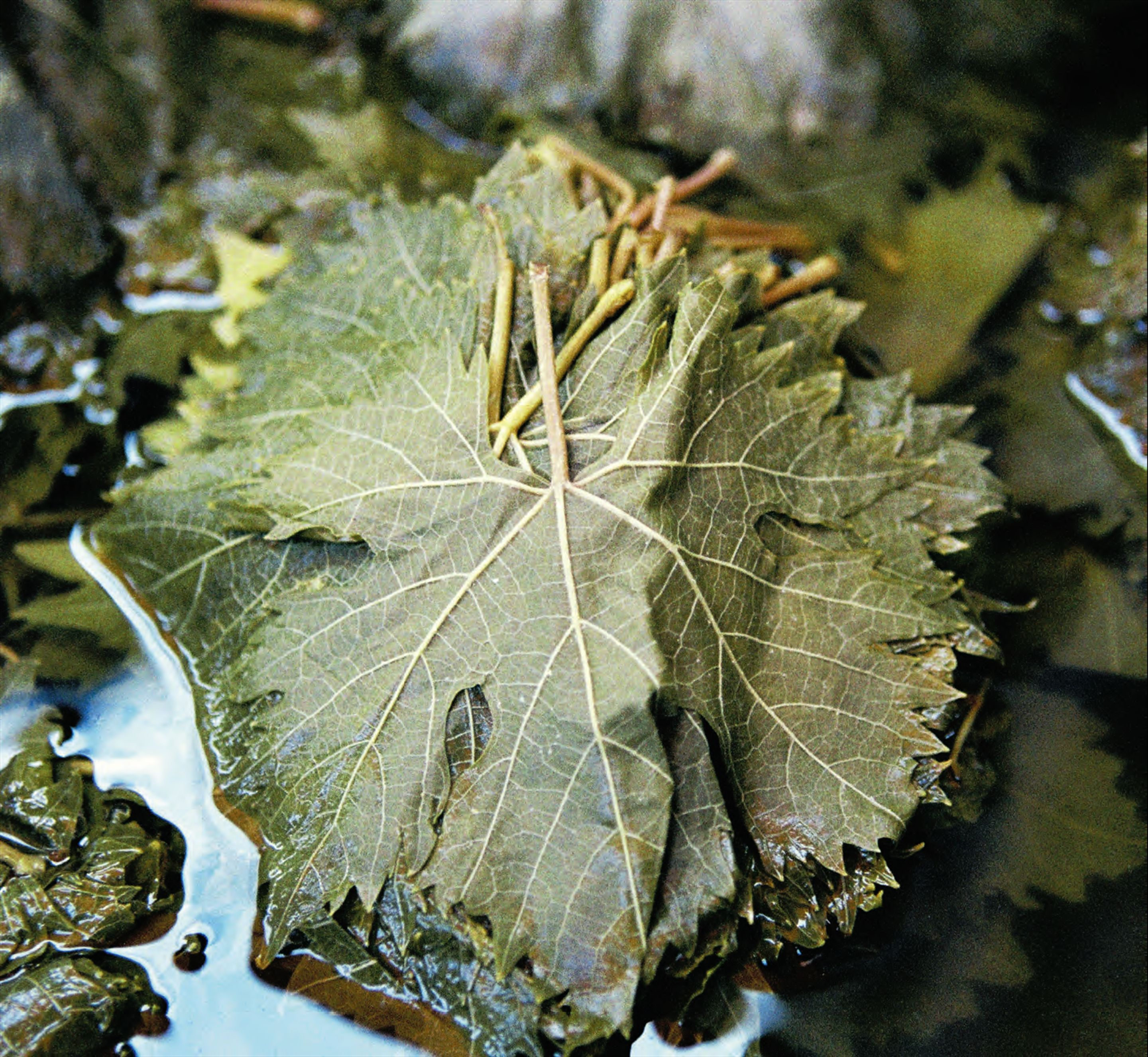 Mushroom-stuffed vine leaves with herbs